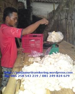 Harga Jual Jamur Tiram   Pasar Jamur di Bali